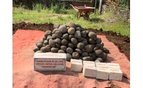 Dana Pemugaran Vihara Dhamma Sarana